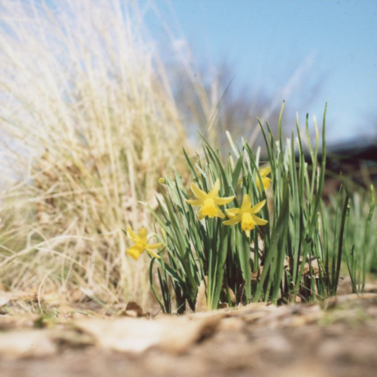 First Signs of Spring | Hasselblad | Azzari Jarrett