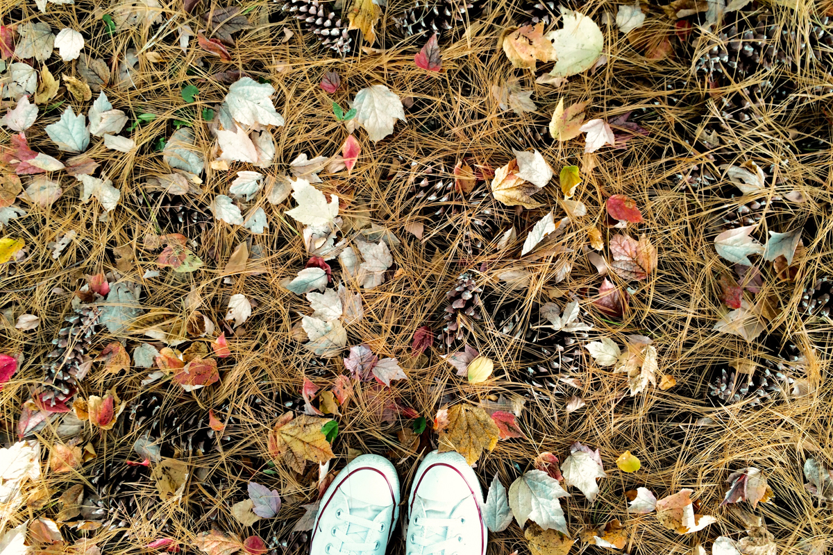 chucks-and-pinecones