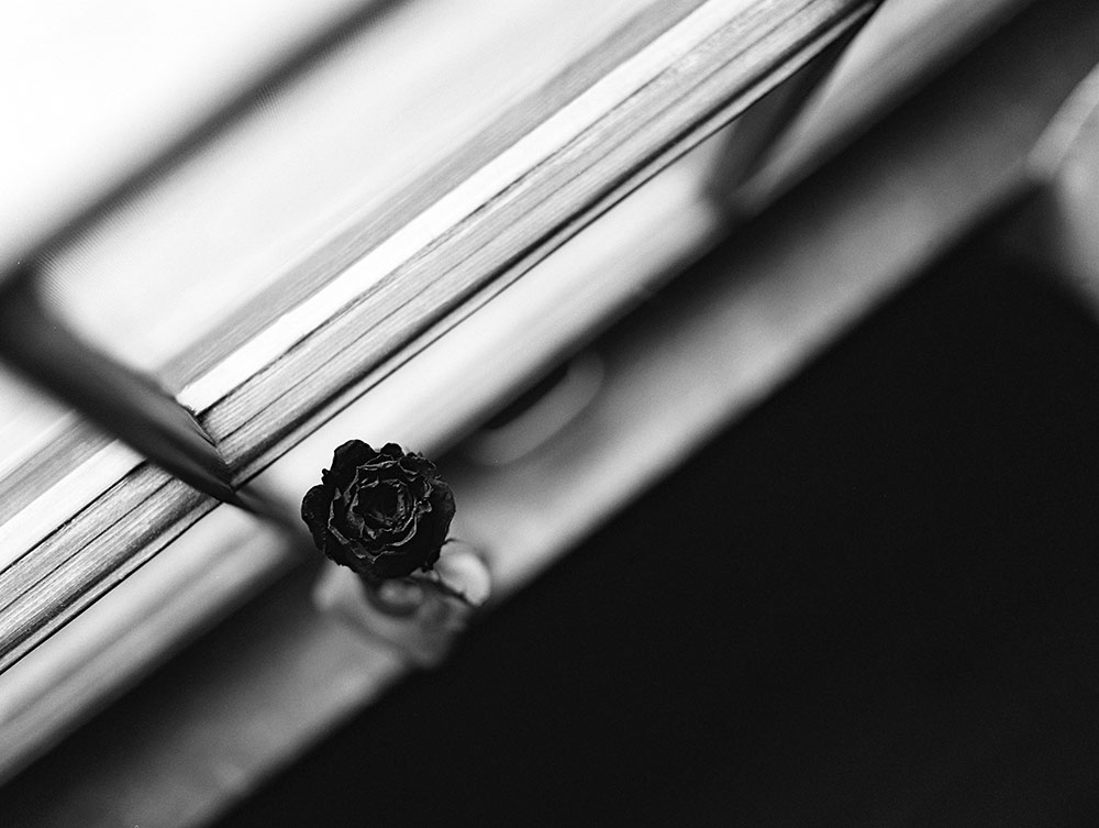 Dried-Rose_rs